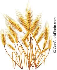 Ears of wheat - Ripe yellow wheat ears on a floor, ...