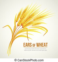 Ears of Wheat. Vector illustration
