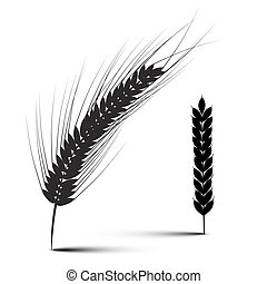Ears of Wheat Vector Illustration Isolated on White...