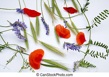 ears of young rye, purple flowers and poppy petals on a white background