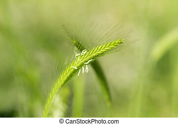 ears on green nature background