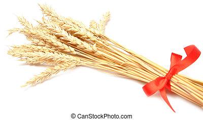 ears wheat