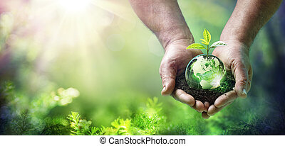 Earth Day Grow Plant On Globe Glass In Green Forest - Environment Concept