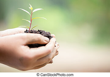 Earth Day In the hands of trees growing seedlings. Female hand holding tree on nature field grass. Bokeh green Background. Forest and environment conservation concept