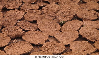 Earth formations on the ground - A steady, close up shot of...