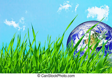 Earth globe in green grass