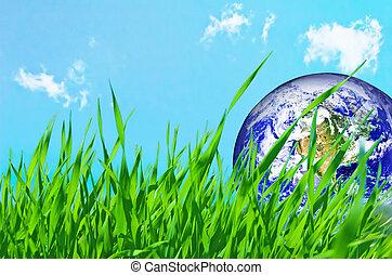 Earth globe in green grass