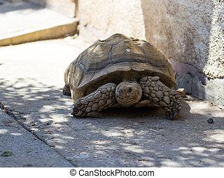 Earthen turtle crawling in track - Earthen turtle crawling...
