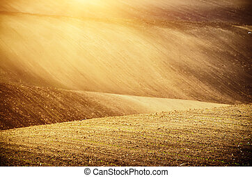 Earthy abstract background - Earthy abstract natural sunny...