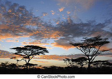 East African landscape with acaccia's and sunset.
