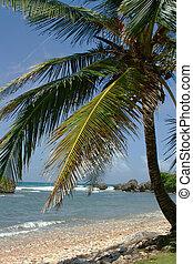 East coast of Barbados