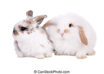 Easter baby bunnies