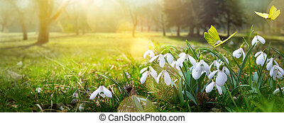 Easter background with fresh spring flower and yellow butterfly