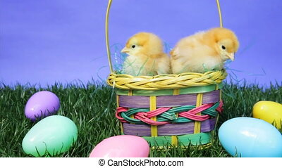 Easter Basket - Baby chicks in an Easter basket