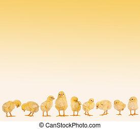 Border frame made of isolated easter chicks