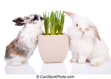 Easter bunnies - Cute little easter bunnies on white...