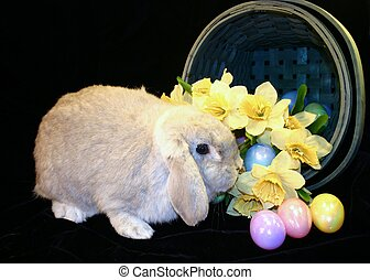 Easter Bunny 3 - Easter Bunny with basket of Easter eggs and...