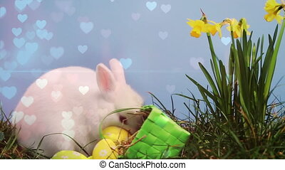 Easter bunny and eggs in a garden