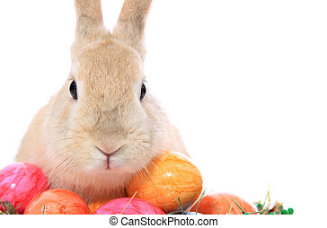 Easter bunny - Cute little easter bunny with colored eggs....