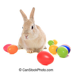 Easter bunny - Cute little easter bunny with colored eggs. ...