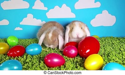 Easter bunny cute rabbit with eggs on green studio background. Cute mini mini video footage. Sallander silver lop.