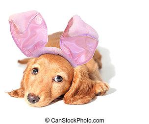 Easter bunny dachshund