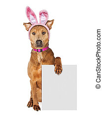 Easter Bunny Dog Holding Blank Sign