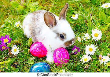 Easter Bunny hide eggs