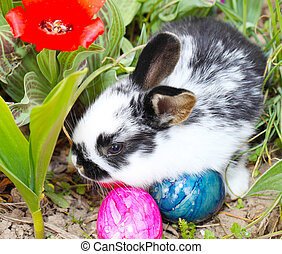 Easter Bunny hiding eggs