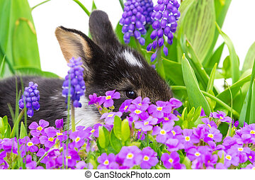 Easter bunny hiding in flowers