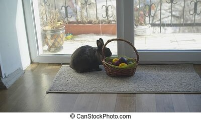 Easter bunny in basket with colorful eggs, candies and tulips on wooden table. Easter concept background.