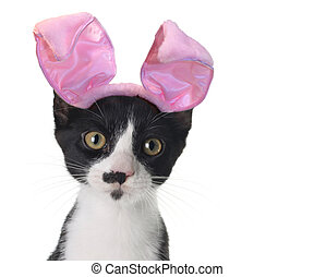 Easter bunny kitten - Funny black and white kitten wearing...