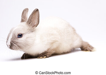 Easter bunny on white background - Easter bunny on white...
