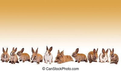 Easter bunny rabbit border - Border frame made of isolated...