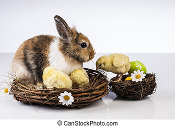 Easter, Bunny, Rabbit, Chicken