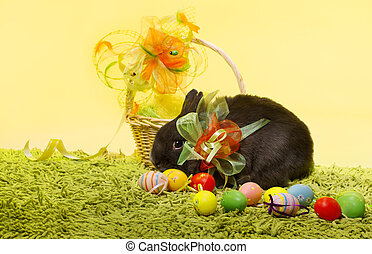 Easter bunny rabbit, Easter basket eggs over decoration yellow background