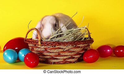 Easter bunny rabbit eggs basket colorful egg cute lop background