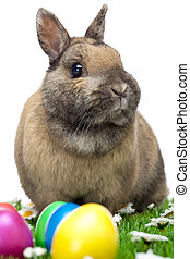 Easter bunny sitting in flower meadow with Easter eggs -...