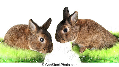 Easter bunny - Cute Easter bunny rabbits.