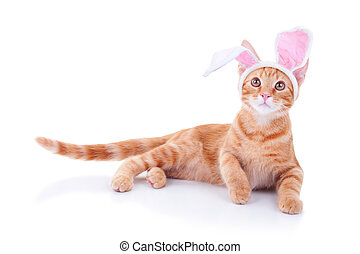 Easter Bunny - Easter bunny cat in bunny ears