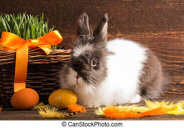 easter bunny with orange easter eggs