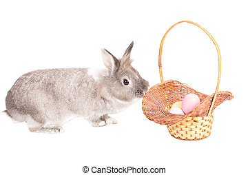 Easter Bunny with basket of Easter Eggs - Adorable little...