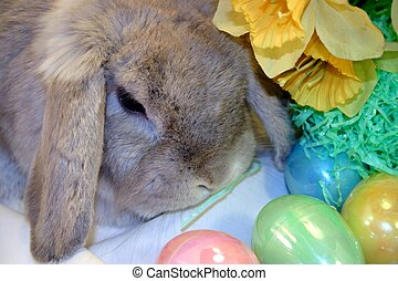 Easter Bunny with daffodils and Easter eggs