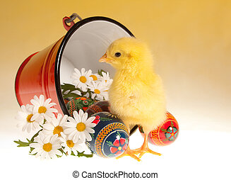 Easter chick and bucket