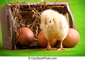 Easter chick