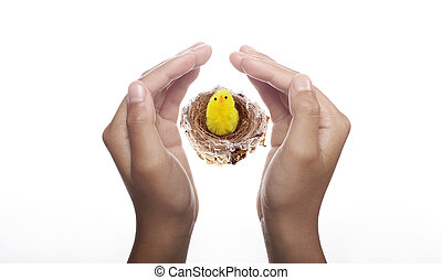 Easter Chick in Nest held up by two hands