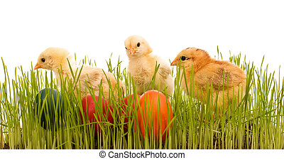Easter chickens in the grass with colorful eggs