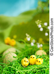 Easter chicks - Easter setting with  chicks, tree and sky