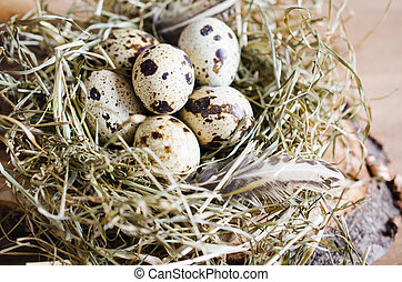Easter Composition of quail eggs in the nest.