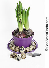 Easter composition with hyacinth and quail eggs